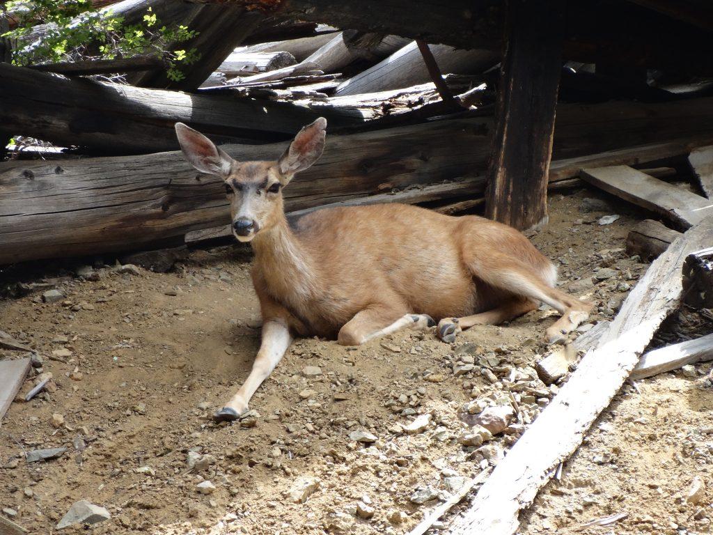 Deer, 2017.