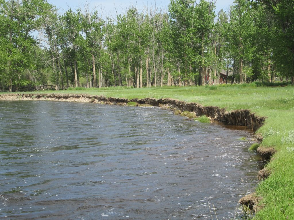 Eroding streambanks add excess bank material (sediment) to the river; repairing and stabilizing streambanks reduces that sediment input, improves water quality & spawning conditions for trout. This photo shows the degraded state of a bank the BHRIP addressed.