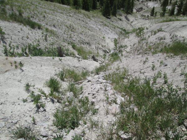 Effects of fertilizer trickle down