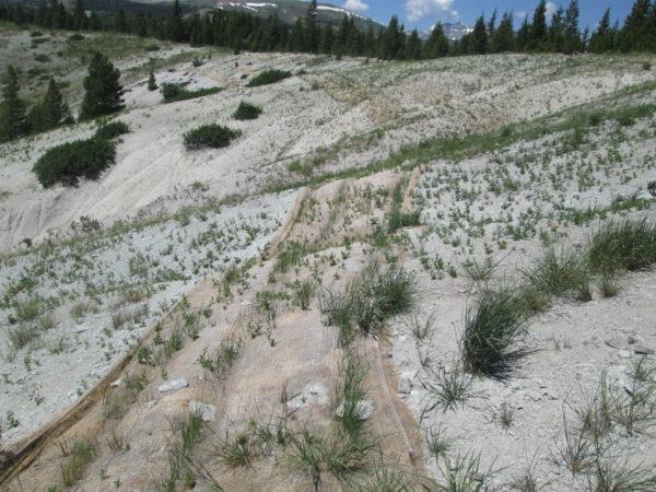 California Creek vegetation strip, moderate growth
