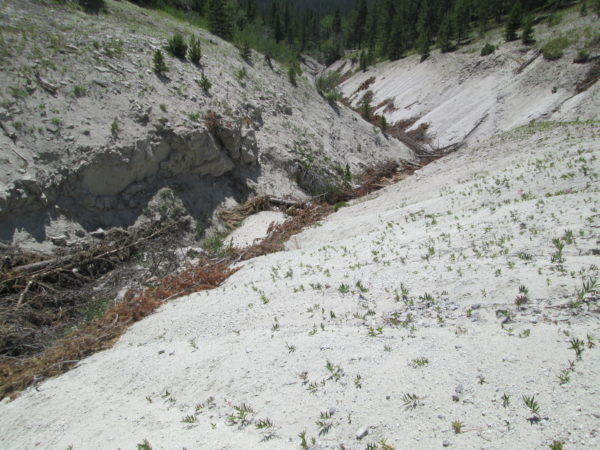 Brush bundles and log check dams in deep gully of California Creek